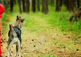 Marketing services agreements can be wolves in sheep's clothing