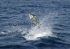 The Salefish: How selling luxury real estate is like trophy fishing