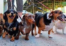 Breaking down DC's most pup-friendly neighborhoods