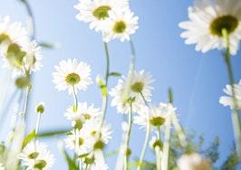 Spring awakening? Homebuyer forecast rosier than first projected