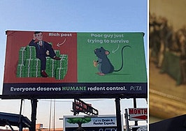 Baltimore billboard calls Trump's landlord son-in-law a 'rich pest'