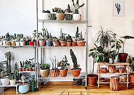 The latest reason millennials aren't buying homes? Houseplants