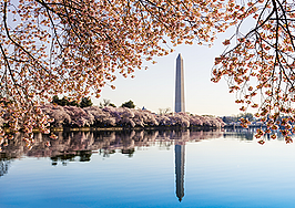 RealScout's Buyer Graph comes to Washington DC