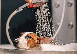 What real estate agents need to know about dog spas
