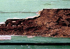 Agent, brokerage on the hook after termite inspector's botched job
